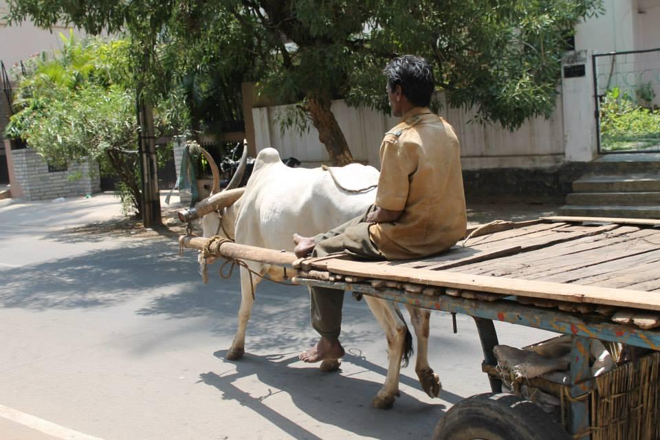 mucca strada bangalore