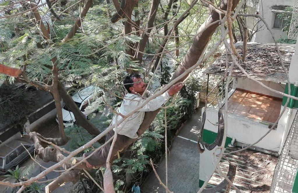 uomo appeso su albero