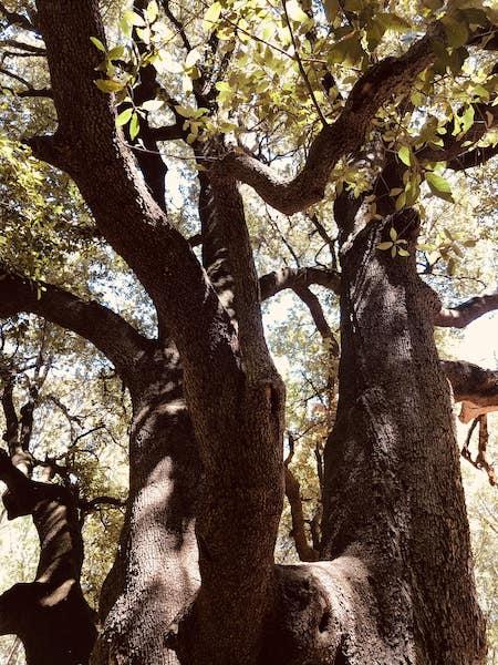 alberi bosco pianelle