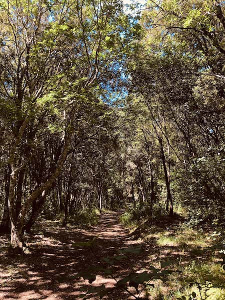 bosco pianelle lecci
