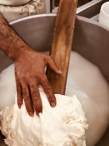 lavorazione mozzarella masseria pianelle